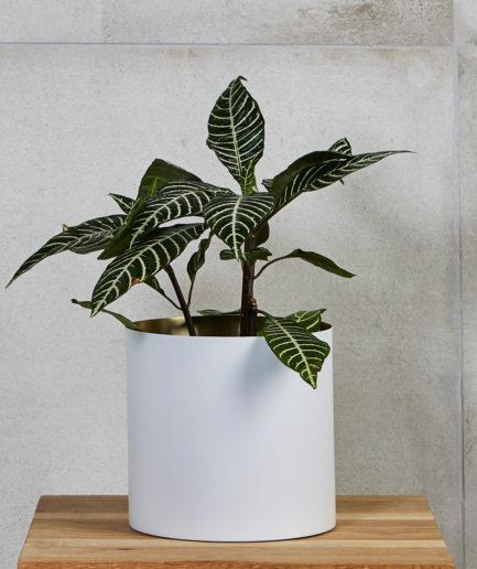 VISI Collab: Plantr Minilux Planter